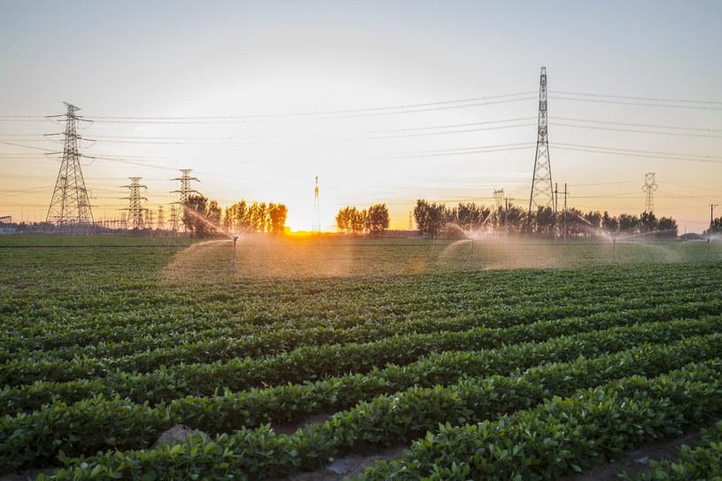 Tańszy prąd nie dla wszystkich - część rolników odejdzie z kwitkiem /123RF/PICSEL