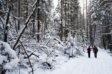Tatry: Od poniedziałku zakaz wędrowania po zmroku. Budzą się niedźwiedzie i świstaki
