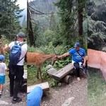 Tatry: Turyści zaczepiali jelenie w drodze do Morskiego Oka