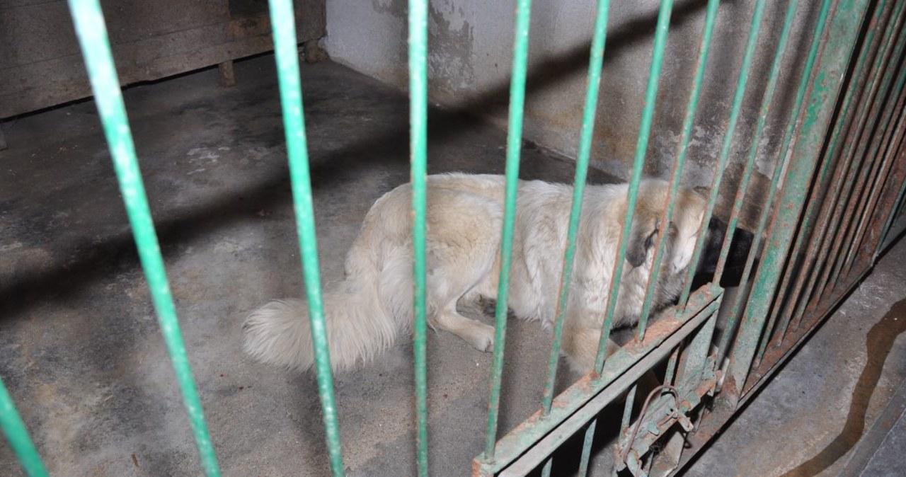 Te psy śmiertelnie pogryzły pięciolatka