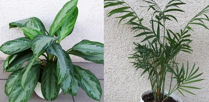 Te rośliny warto mieć w swoim domu /Wikipedia