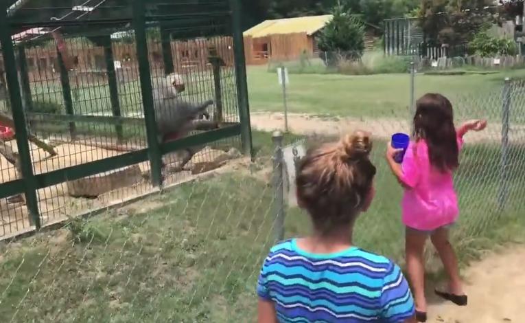 Tę wizytę w zoo te dziewczynki zapamiętają na zawsze /AEKF /YouTube