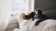 Te zwierzaki kochają się przytulać. Zdjęcia rozczulają