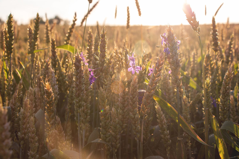 Tegoroczne lato ma być upalne i suche na południu Europy /123RF/PICSEL