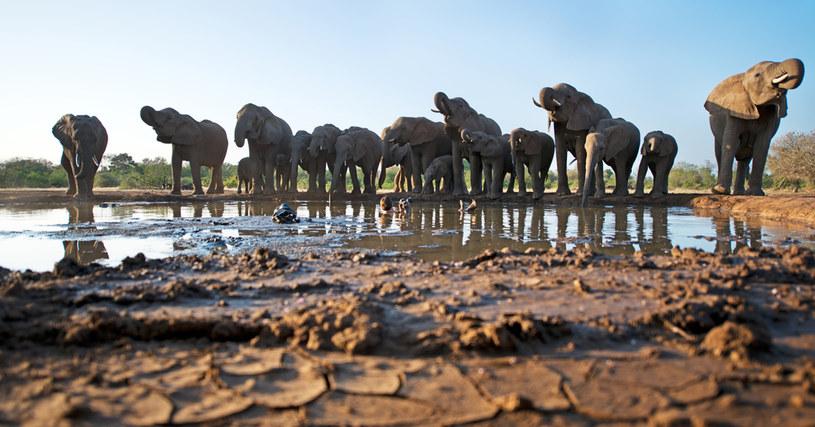 Tegoroczny sezon polowań ma się rozpocząć w kwietniu, zdj. ilustracyjne /Greg Du Toit / Barcroft Media /Getty Images