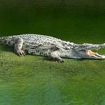 Teksas: Dzieci łapią aligatory gołymi rękami