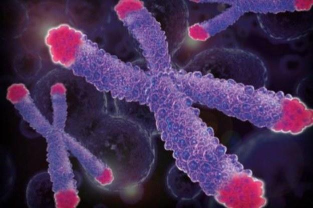 Telomery - genetyczna recepta na nieśmiertelność /materiały prasowe