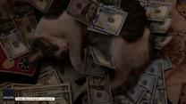 Temu kotu do szczęścia potrzebne są tylko... pieniądze