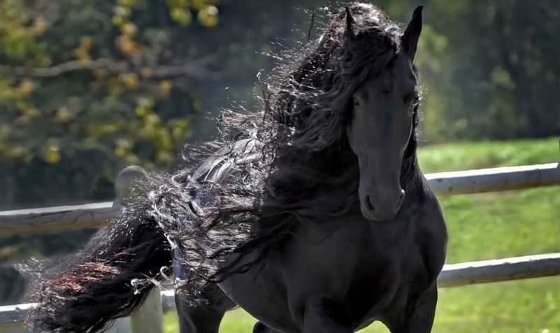 Ten koń ma to coś! /Frederik The Great /YouTube