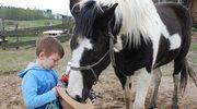 Ten koń ratował dziecięce dusze. Uratujmy mu życie
