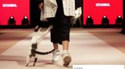 Ten kot skradł modelkom show!