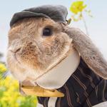 Ten królik ma klasę i styl!