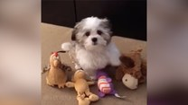 Ten pies doskonale wie, kto jest jego najlepszym przyjacielem! Z małym wyjątkiem