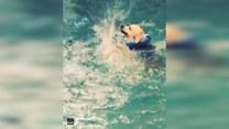 Ten pies musi jeszcze popracować nad techniką pływania