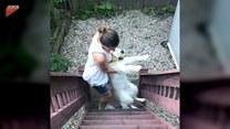 Ten pies nie miał zamiaru wracać do domu. Potrzebna była interwencja