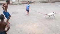 Ten pies potrafi kręcić skakanką