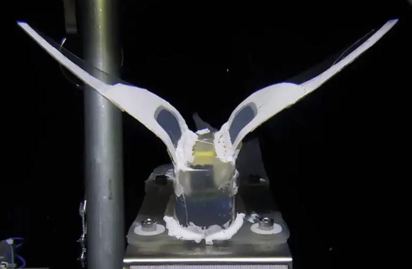 Ten robot jest w stanie przetrwać w warunkach ekstremalnego ciśnienia /materiały prasowe