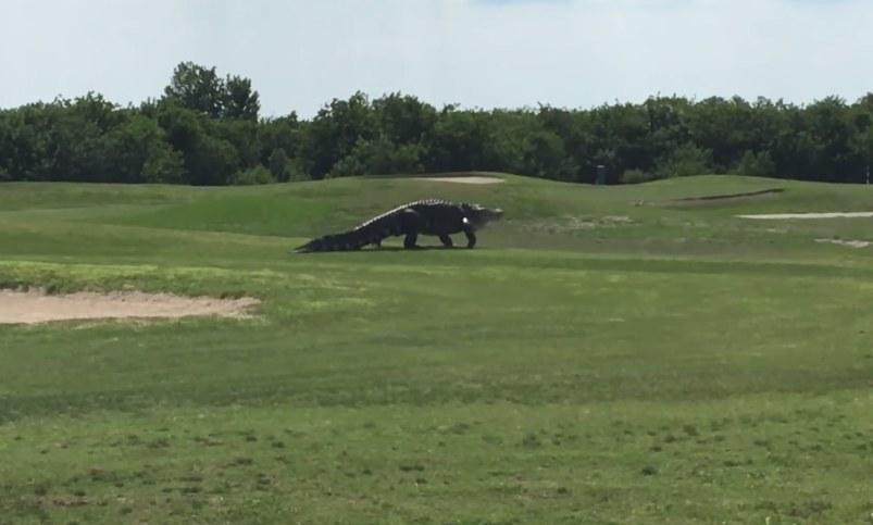 Ten widok wprawił wszystkich w osłupienie! /Golf.com /YouTube