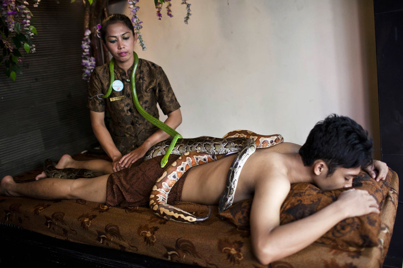 terapia wężami /© Photogenica
