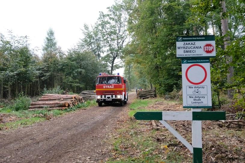 Teren na którym doszło do eksplozji niewybuchu w kompleksie leśnym w pobliżu Kuźni Raciborskiej /Hanna Bardo /PAP