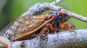 Terra insecta: Naszą planetą rządzą owady