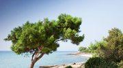 Thassos – najspokojniejszy zakątek Grecji