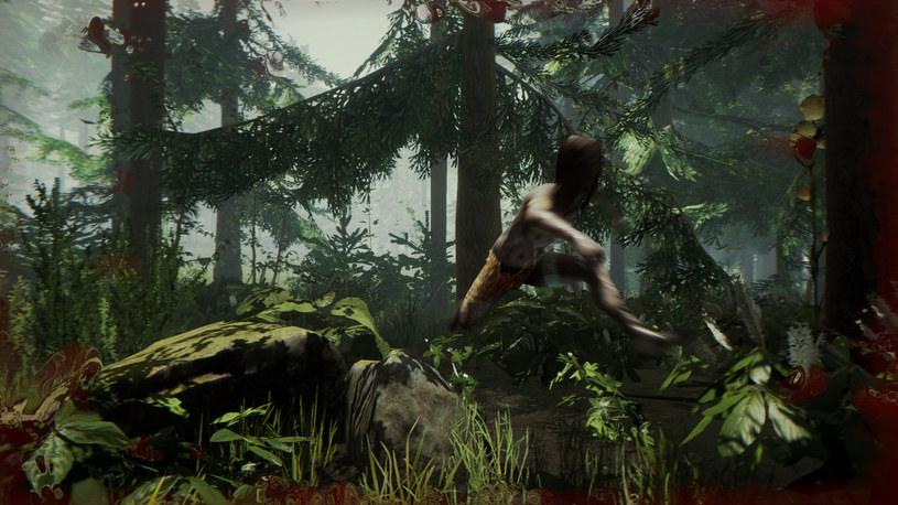 The Forest /materiały prasowe