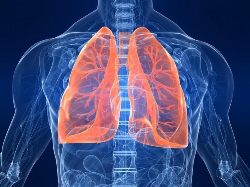 Tłuszcz a zdrowie płuc /© Photogenica