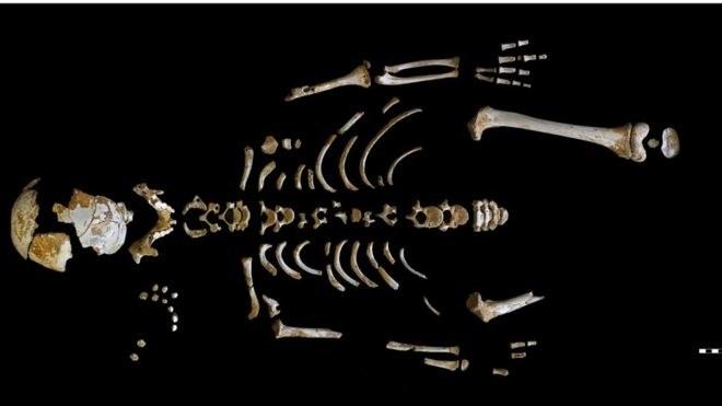 To dzięki analizie takiego szkieletu udało się dokonać przełomowego odkrycia /materiały prasowe