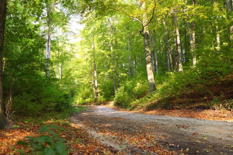 To już jesień... /123RF/PICSEL
