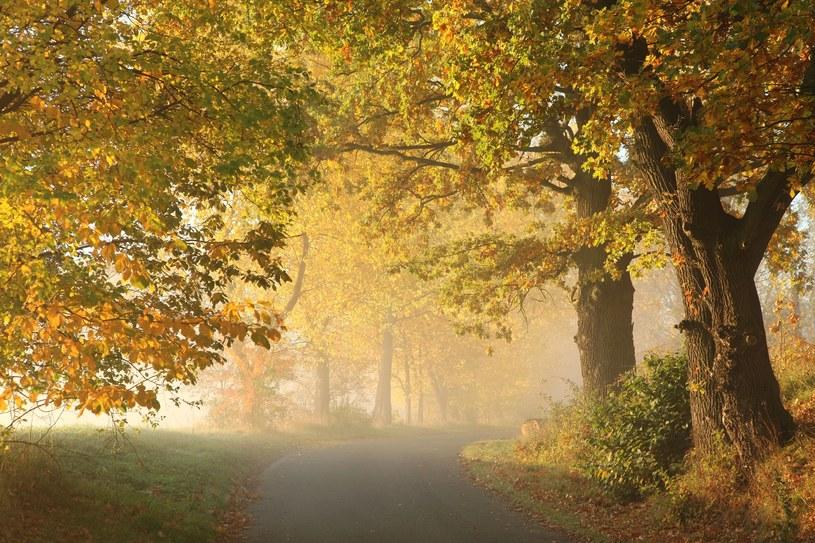 To już jesień /123RF/PICSEL