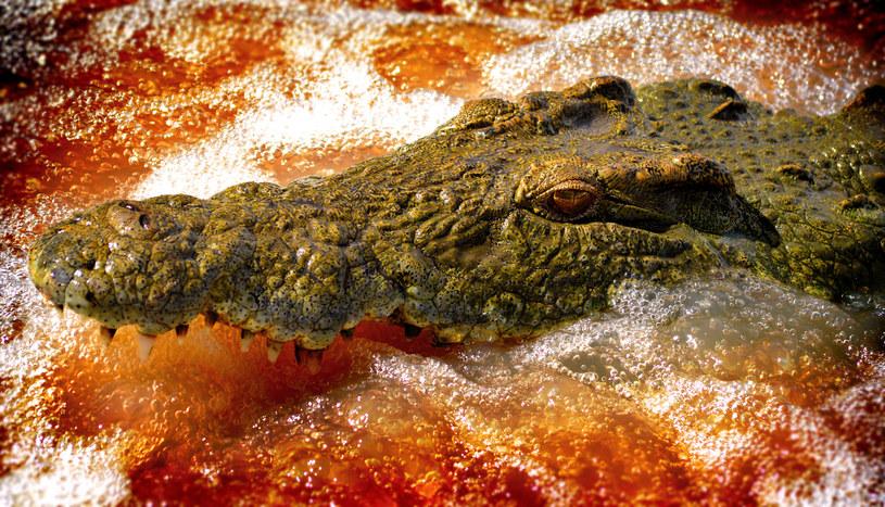 To już kolejny atak krokodyla w rezerwacie. Zwykle winny jest brak wyobraźni człowieka /123RF/PICSEL