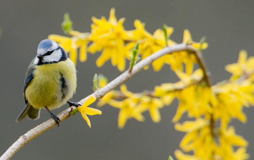 To już wiosna /123RF/PICSEL