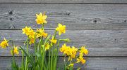 To już wiosna!