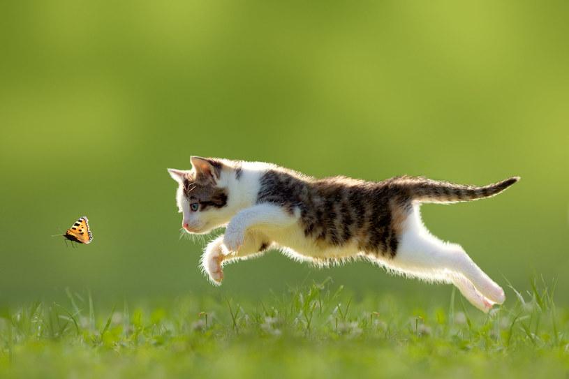 To musisz wiedziec o kotach wychodzących /123RF/PICSEL