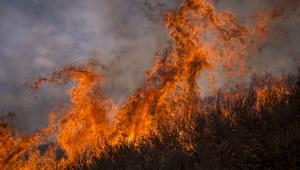 """""""To największy pożar w historii Los Angeles"""""""