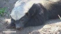 To najwredniejsze zwierzęta na świecie