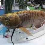 To ryba? To ssak? Nie, to najnowszy chiński dron szpiegowski