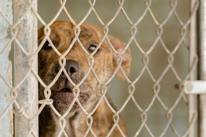 To szokujące, ale psy faktycznie mogą być źródłem SARS-CoV-2 /123RF/PICSEL