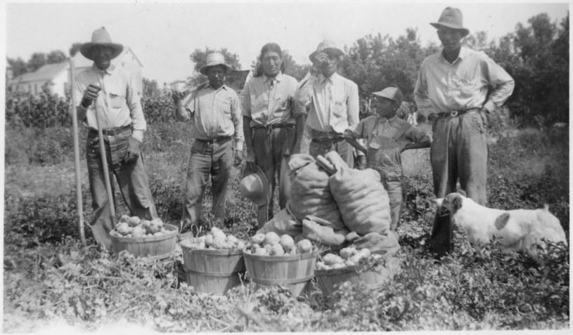 To w Ameryce Południowej Europejczycy po raz pierwszy zobaczyli ziemniaki /Wikipedia /materiały prasowe