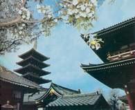Tokio, świątynia Asakusa Kannon /Encyklopedia Internautica
