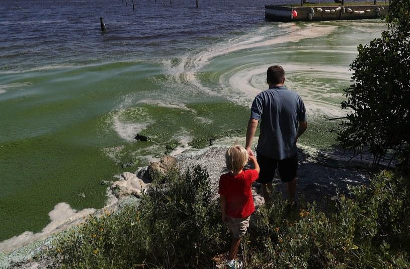 Toksyczne glony u wybrzeża /GETTY IMAGES NORTH AMERICA JOE RAEDLE /AFP