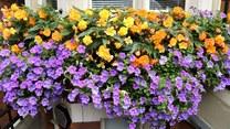 Top 7 najpiękniejszych roślin balkonowych