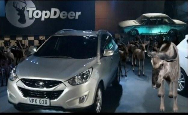Top... Deer /
