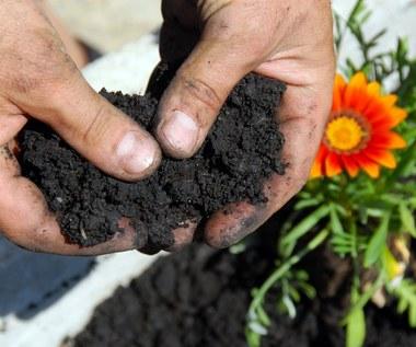Torf ogrodniczy: Właściwości i zastosowanie