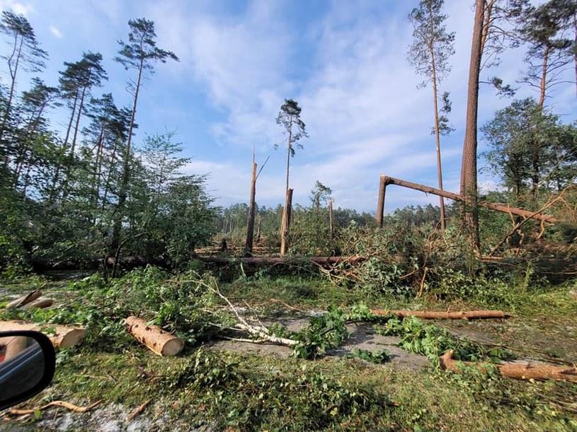 Trąba powietrzna spustoszyła las w Borach Tucholskich /Regionalna Dyrekcja Lasów Państwowych w Toruniu /materiały prasowe
