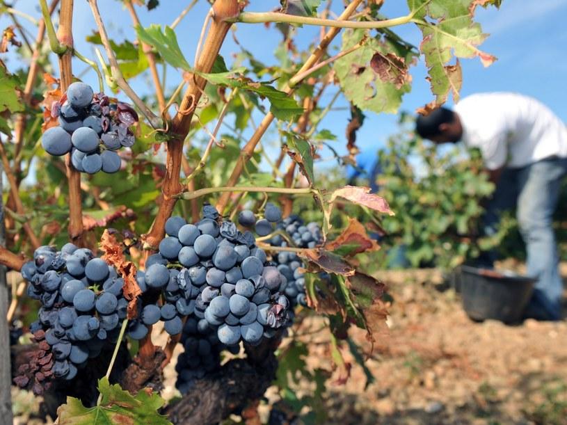 Tradycje winiarskie sięgają tu dwóch tysięcy lat  /AFP