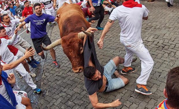 Tradycyjne gonitwy z bykami w Pampelunie. 8 osób rannych, 3 wzięte na rogi