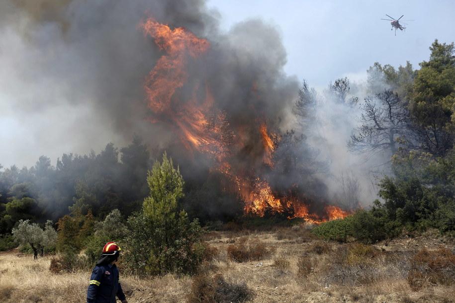 Tragiczne pożary w Grecji sprzed dwóch lat /KOSTAS TSIRONIS /PAP/EPA