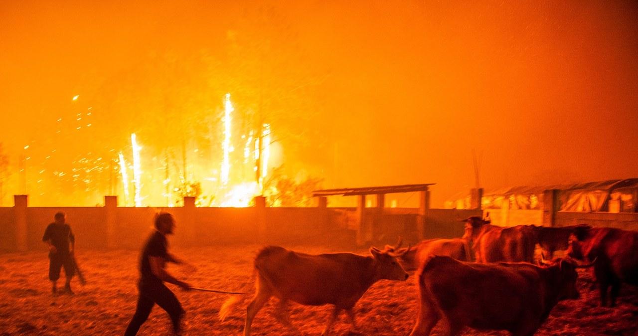 Tragiczny bilans pożarów w Portugalii i Hiszpanii
